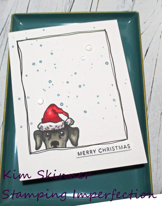 Build your holiday card stash with peeking pets